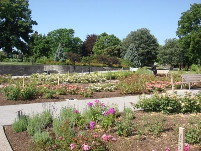 thumbnail_RBG-rose garden
