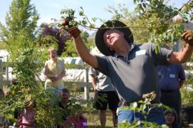 paul zimmerman pruning
